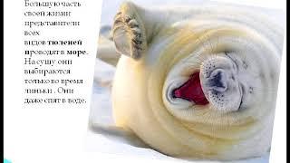 Презентация Окружаемый мир 4 кл. Арктика