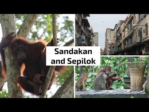 Sandakan and Sepilok | Sabah, Borneo | Ep. 3