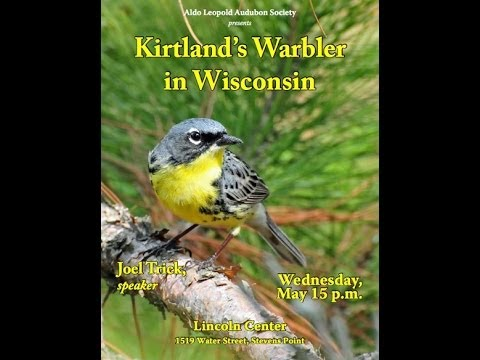 Kirtland's Warblers in Wisconsin by Joel Trick, U.S. Fish and Wildlife Service