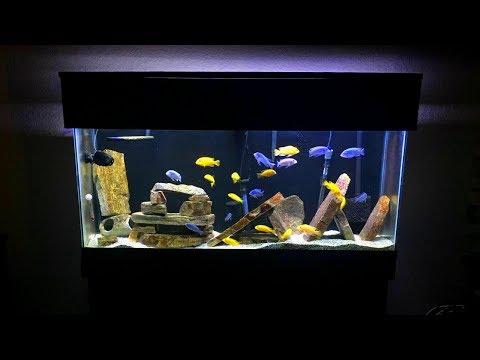 Mbuna Aquarium Setup - Gorgeous African Cichlid Aquarium!!