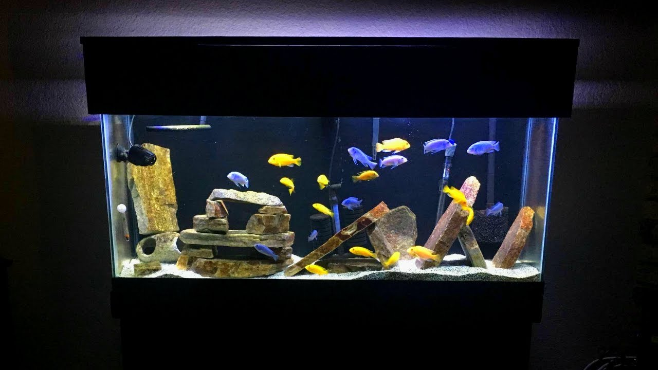 Mbuna Aquarium Setup Gorgeous African Cichlid Aquarium
