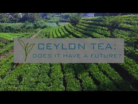 Ceylon Tea: Does it have a future?