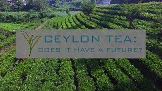 Ceylon Tea: Does it have a future?
