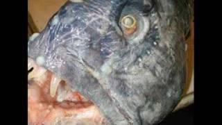 10 najbardziej przerażających ryb Świata!