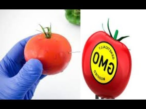 HOW TO IDENTIFY GMO TOMATOES IN 2 EASY STEPS