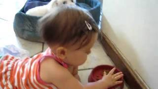 Baby Eating Maltese Poodle's Food