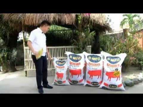 Proper Feeds per Hog's Age -Tamang Pamamalit ng Pagkain ng Baboy- B-MEG Premium hog Raising