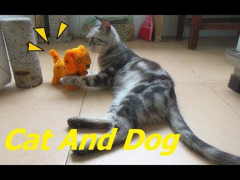 Cat Play With Dog Toy So Funny In Weekend | Funny Dog vs Cat Fight  2017 | Cat and Dog