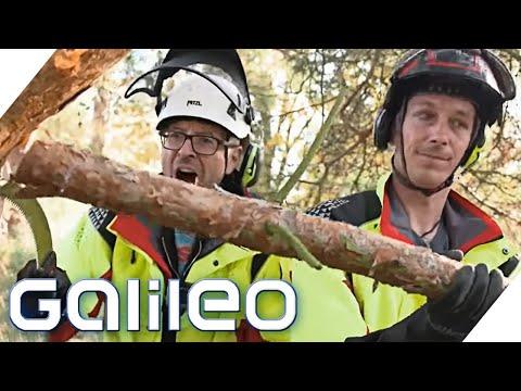 Baum fällt! Wie gefährlich ist der Job des Baumpflegers? | Galileo | ProSieben