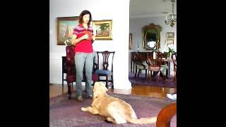 Training For Apartment Living- Big Dog, Small Space