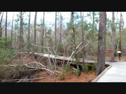 The Okefenokee Swamp at Stephen C. Foster State Park