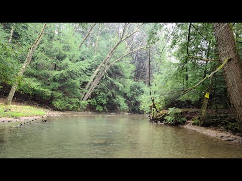 Opening Day PA Trout 2020 (Stream Fishing)