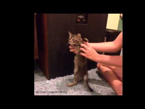 grab the wall cat (vine)