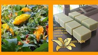 Faça Sabonetes Medicinal de Melão de São Caetano – Sem Soda