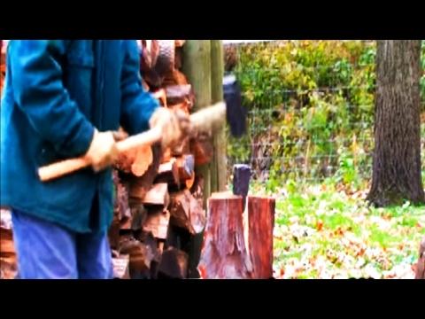 *White Oak Tree* +Quercus alba+Huge Leaf/Acorns+Heavy Shade+