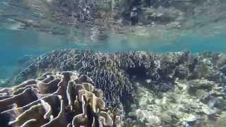 Snorkeling & Freediving Kolom Karang, Tumbak Island - North Sulawesi, Indonesia