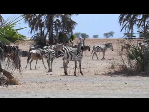 The Shores of Lake Manyara
