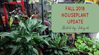 LAST Houseplant Tour of 2018 // December 2018