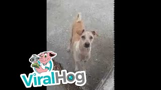 Mama Dog Begs, Brings Food Back to Pups || ViralHog