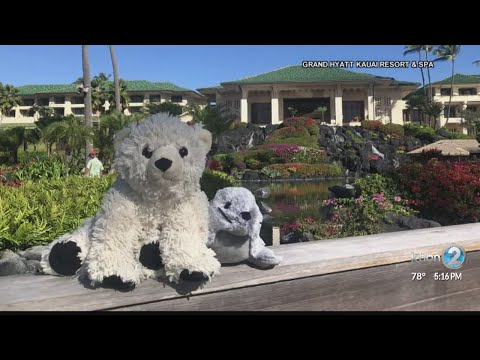 Heath West - Lost Teddy Bear Reunited With Owner After Hawaiian Adventure