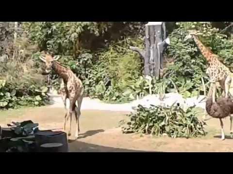 عرض حيوانات الغابة المفتوح