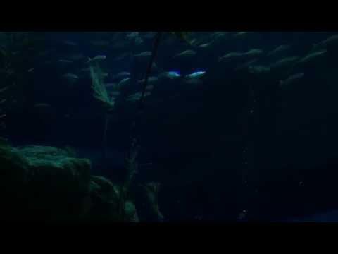 香港海洋公園尋鯊探秘 Hong Kong Ocean Park Shark Mystique