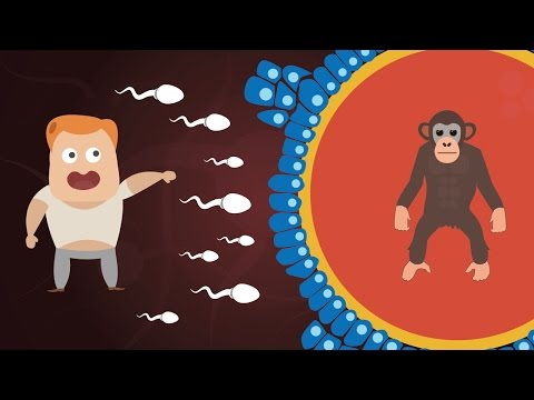 Can Humans and Chimpanzees Have Babies? | Animal Human Hybrids Explained