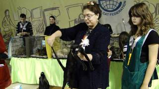 4 декабря, выставка Кошки Петербурга