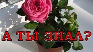 видео Рекомендации по уходу за цветами в домашних условиях