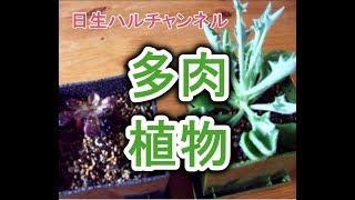 【多肉植物】多肉植物、始めました!