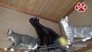 いっぱい鳴いた子猫たちとやもりの赤ちゃん gecko and cats
