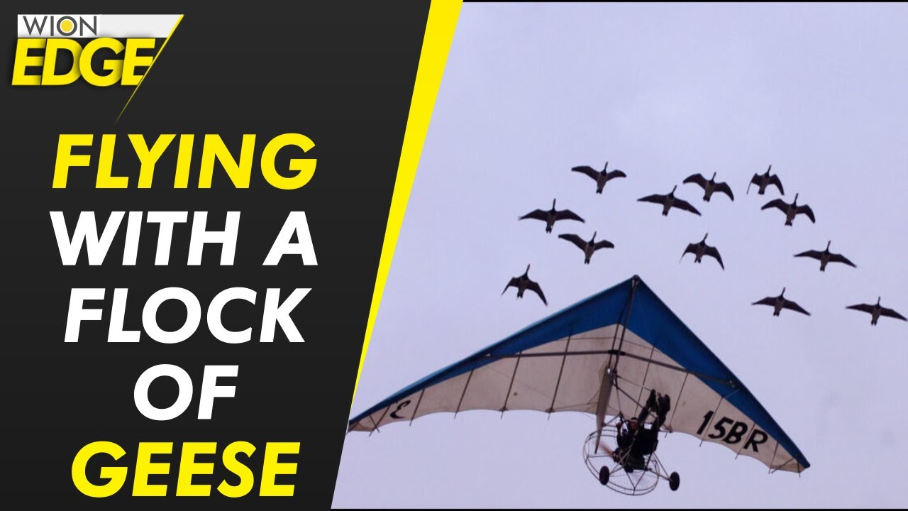 Download Woman flies with geese over the Alps