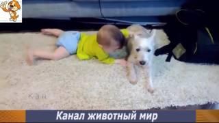 Приколы про животных с детьми  Маленькие дети и собаки! Funny animal Смешно до слез. Cute dogs!