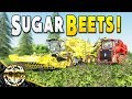 SUGAR BEETS : ROPA TIGER 6 XL WITH HOLMER VARIANT TRAILER - Farming Simulator 19 Gameplay - EP 2