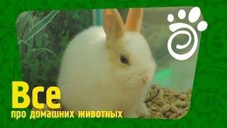 Кролики - это не только ценный мех (продолжение).Все О Домашних Животных