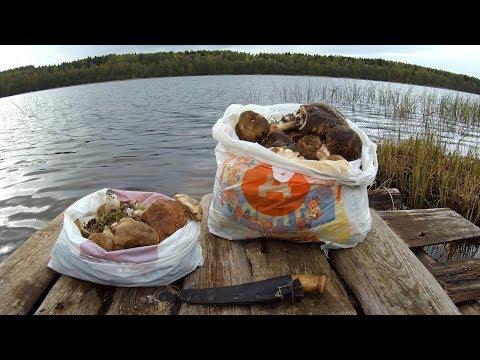 Рыбалка с ночёвкой осенью,удачный сбор грибов и отдых 18+) Часть -2