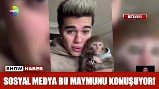 Sosyal medya bu maymunu konuşuyor!