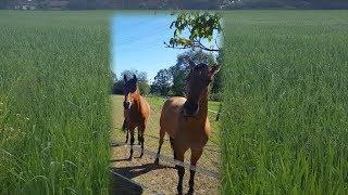 Диалог с лошадью ...