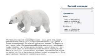 Сколько весит белый медведь