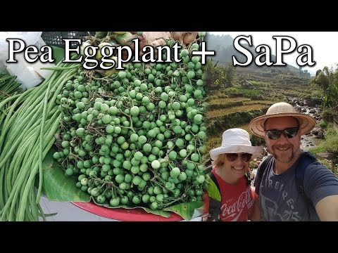 Growing Pea Eggplant Growing Corn Asian Vacation in SaPa Vietnam