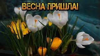 Весна пришла! Поздравляю !