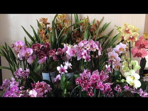 Продажа сортовых орхидей. Ссылка на бронирование в описании к этому видео.