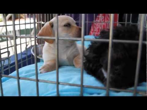 Eastlake Village Veterinary Clinic | Dog Rescue | San Diego | Adoption