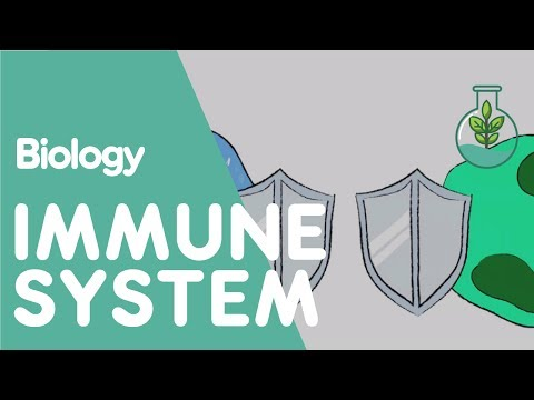 The Immune System | Health and Drugs | FuseSchool