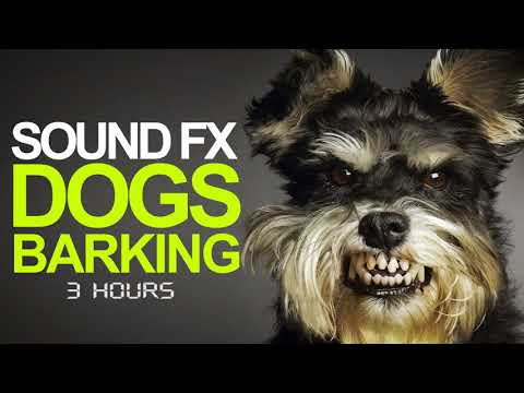Cute Dog Bark Sound Effect