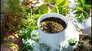 Монастырский чай для сосудов