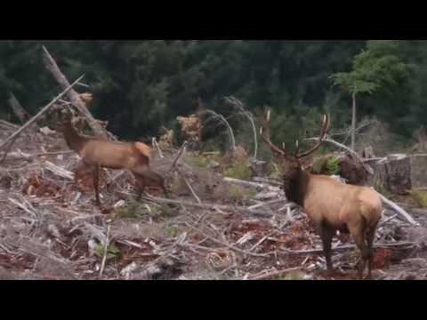 2016 Washington Archery Elk Hunt