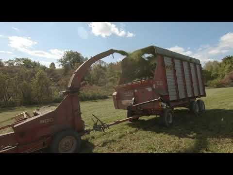 Billy Scheff Your Videos on VIRAL CHOP VIDEOS