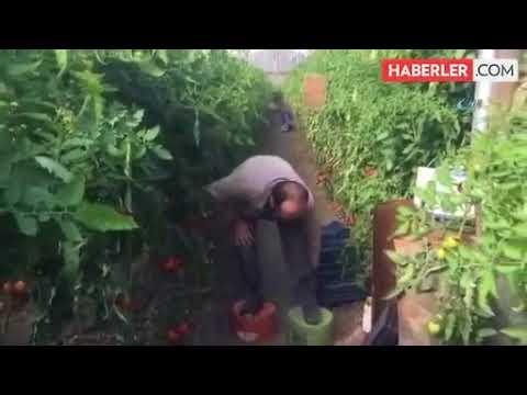 Antalyalı Çiftçi, Yaptığı İcatla Boyunu Uzattı