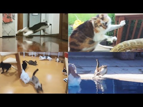 Scared Cats Compilation